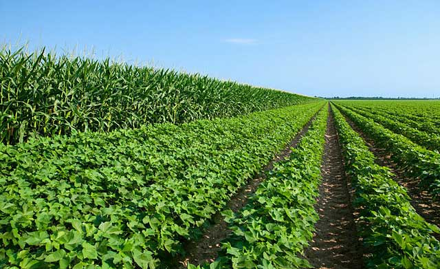 Microsoft's cloud technology increases crop yield in Andhra