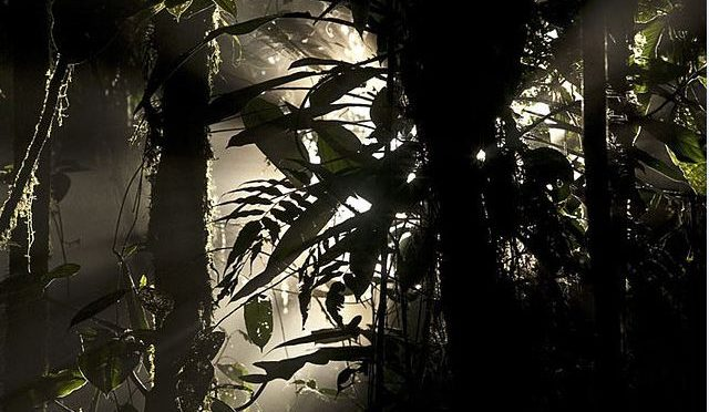 Could restoring Latin America's cloud forests boost hydropower?