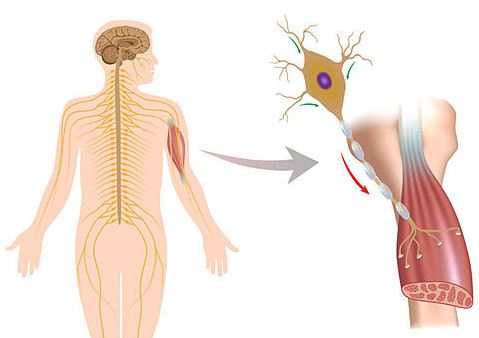 Electromagnetic fields linked with nerve disease: study