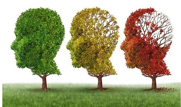 Common gene explains why some people's brains age faster