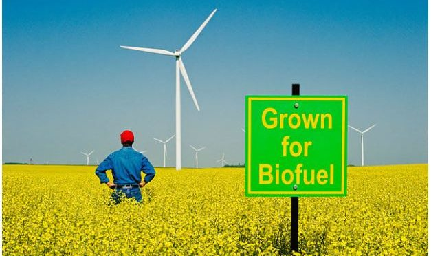 Biofuels could cut transport emissions – but food may be at risk