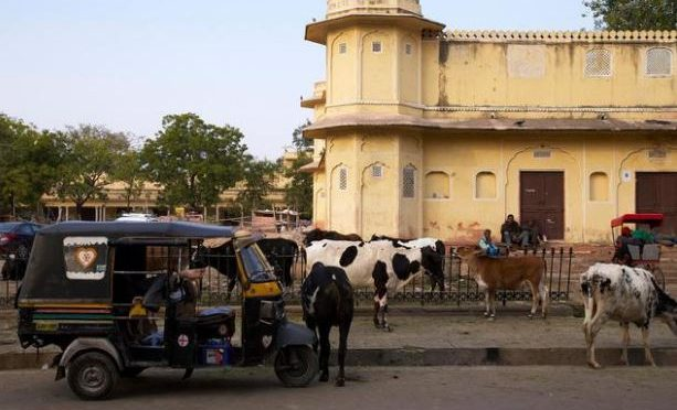 Cows on road? Indian engineers develop alert system for drivers