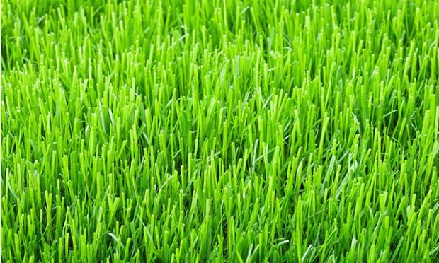 Grass could power your future flight