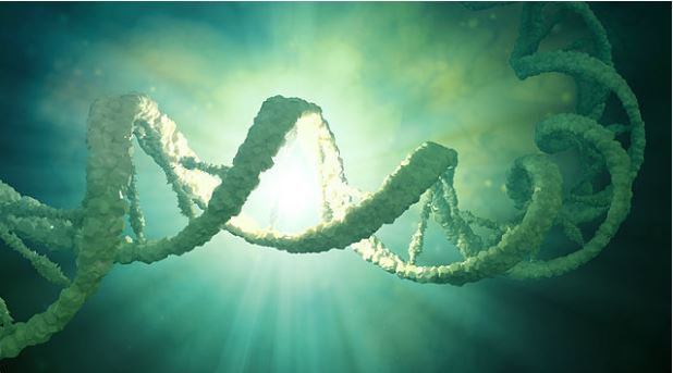 Multi-gene test found effective in predicting Alzheimer's diseasev