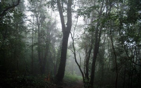 New tool to improve Indian monsoon forecast