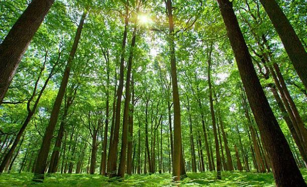 Indian-born scientist attempts treating hearts via urban forests