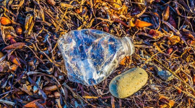 Seaweed solution to plastic bottle crisis
